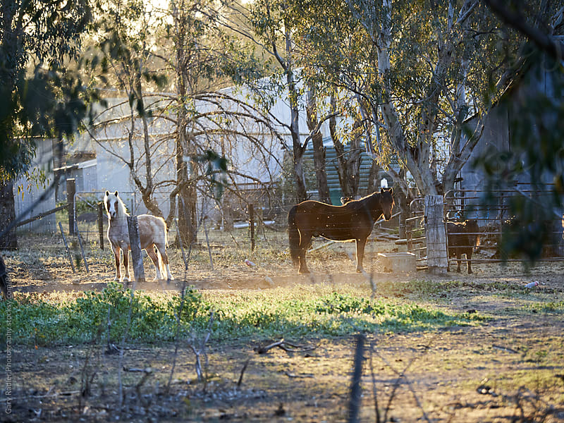 Horses Basking in the Evening Sun by Gary Radler Photography for Stocksy United