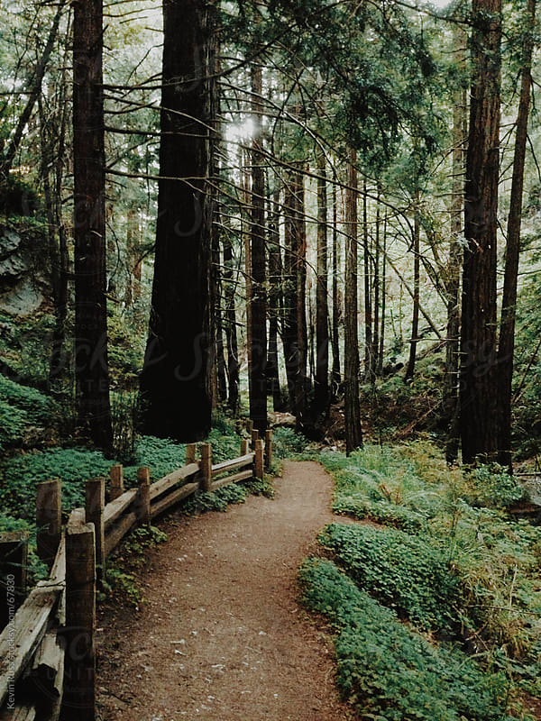 Forest Trail by Kevin Russ for Stocksy United