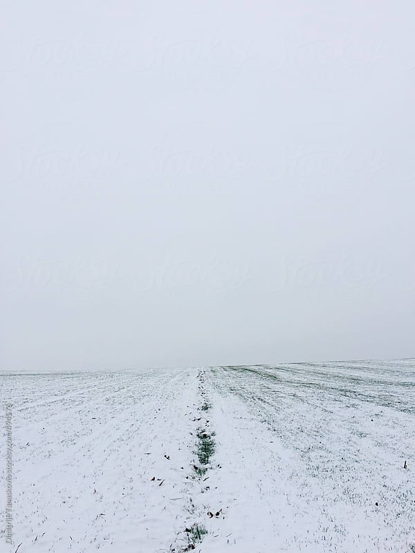 Winter field covered with snow by Dimitrije Tanaskovic for Stocksy United