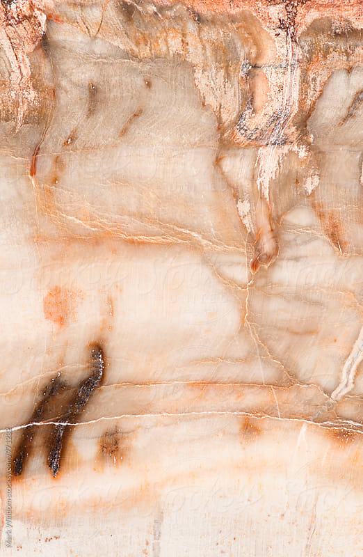 Petrified wood macro by Mark Windom for Stocksy United