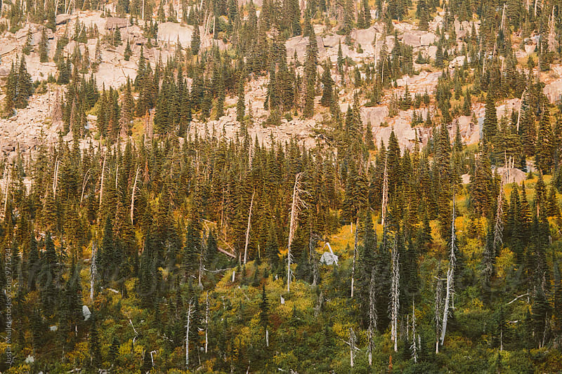 Alpine Trees on a Rocky Mountain Side by Justin Mullet for Stocksy United