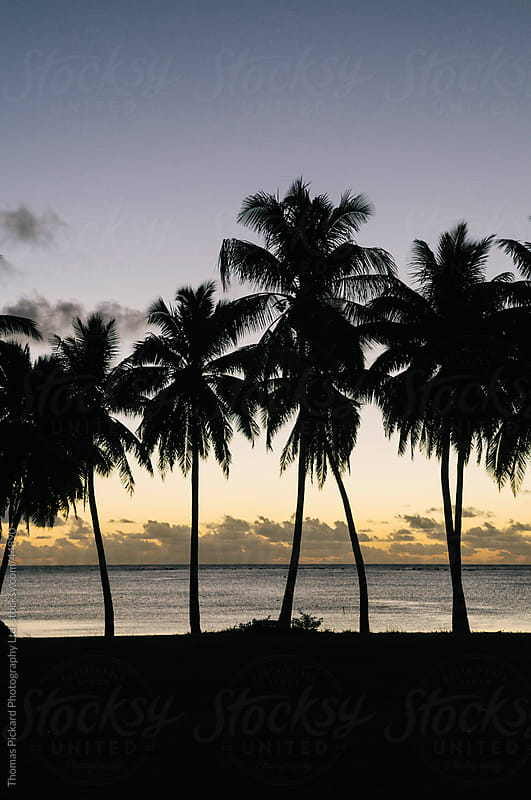 Palm tree silhouettes at sunset, Aitutaki Island, Cook Islands. by Thomas Pickard Photography Ltd. for Stocksy United