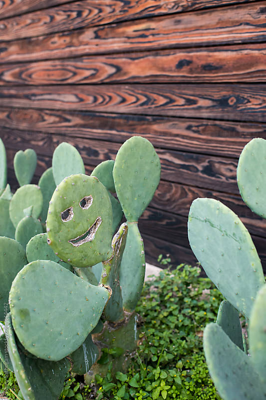 Happy Cactus Next to Wood Wall by Jenny Sathngam for Stocksy United