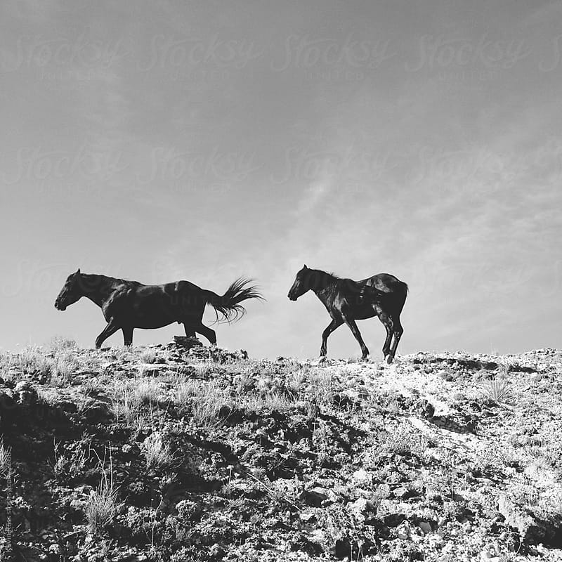 Wild Mustangs by Kevin Russ for Stocksy United