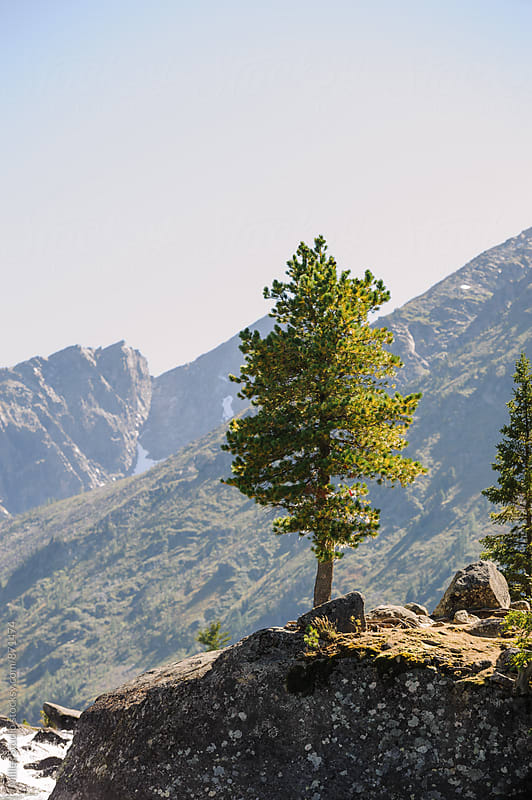 Tree in mountains by Milles Studio for Stocksy United