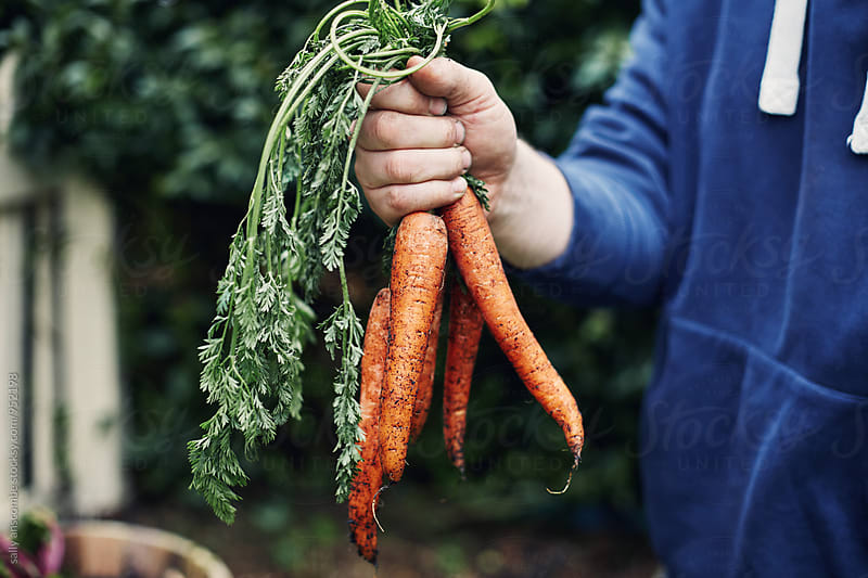 Man holding a bunch of carrots by sally anscombe for Stocksy United