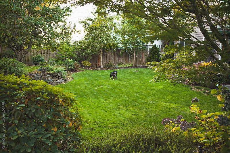 Dog in Backyard by Kevin Gilgan for Stocksy United