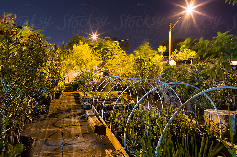Plant nursery at twilight by Nicole Mlakar for Stocksy United