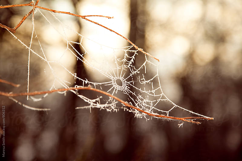 A frosty cobweb photographed at golden hour during winter by Maresa Smith for Stocksy United