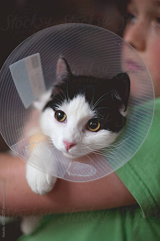 a young cat recovers from an operation with a plastic collar in her owners arms by Natalie JEFFCOTT for Stocksy United