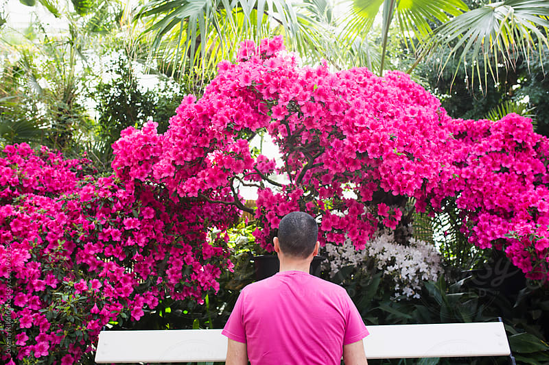 Back view of a man wearing a pink shirt and pink flowers by Jovana Rikalo for Stocksy United