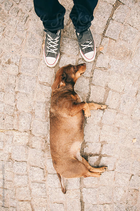 Tired dog on streets of Poland.  by Marija Savic for Stocksy United