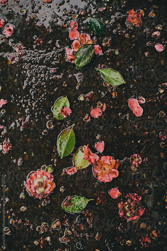 Ground Floral by Sara K Byrne Photography for Stocksy United