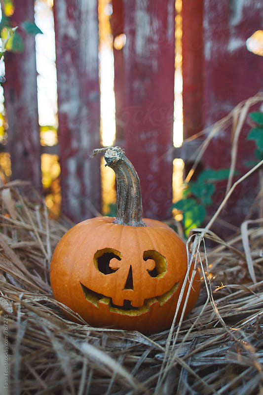small carved jack o'lantern sitting in dead grass in front of fence by Tana Teel for Stocksy United