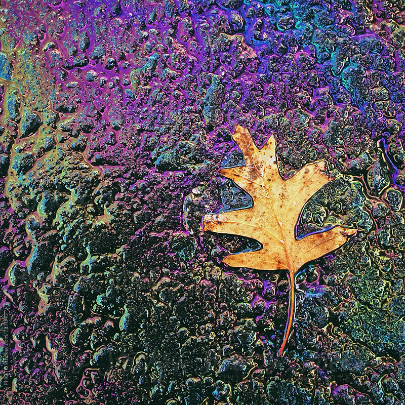 Single leaf on oil and water on Asphalt by ZOA PHOTO for Stocksy United