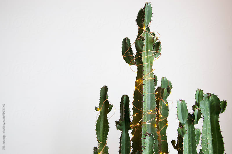 Cactus wrapped in a string of lights by Ali Lanenga for Stocksy United
