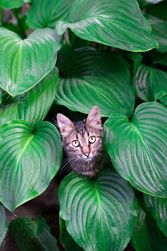 Curious cat peeking through green leaves by Pixel Stories for Stocksy United