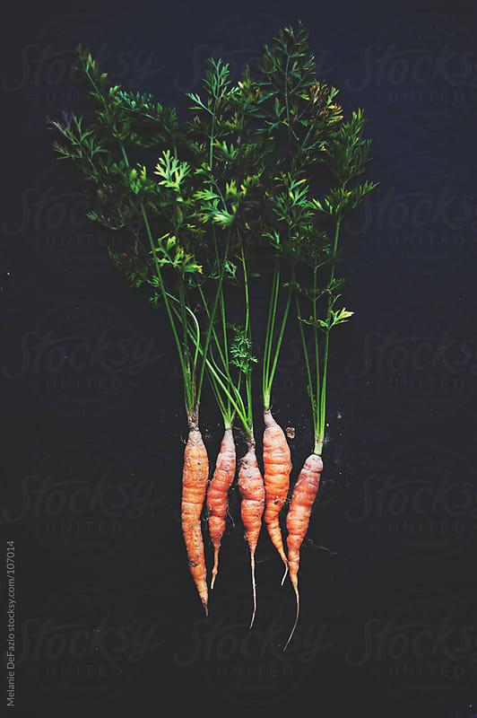 carrots by Melanie DeFazio for Stocksy United