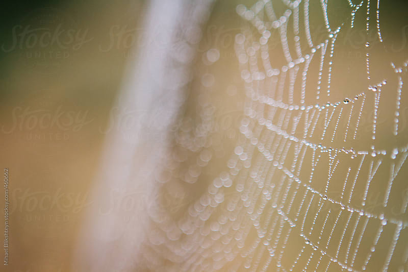Macro of an intricate and fragile spider web with tiny dew drops from the rain by Mihael Blikshteyn for Stocksy United