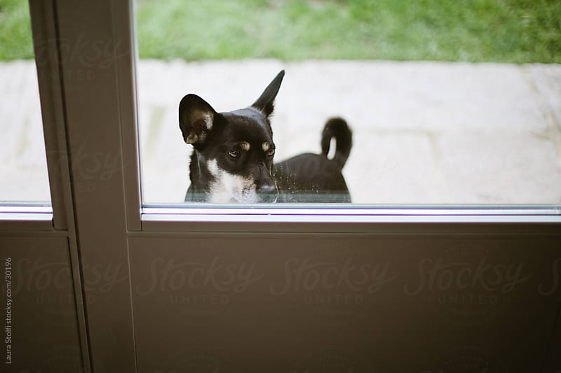 A little black dog in front of glass door waiting to come inside the house by Laura Stolfi for Stocksy United