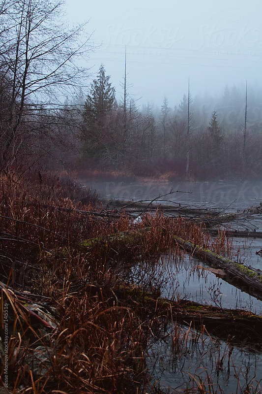Spooky lake in Whistler, BC by Jesse Morrow for Stocksy United