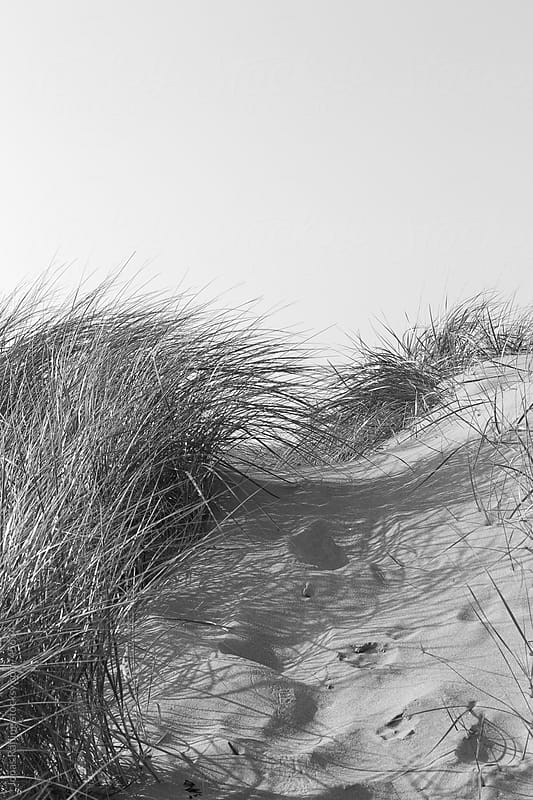 Natural path among the dunes on the beach by Jonas Räfling for Stocksy United