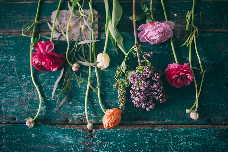 Spring flowers by Adrian Cotiga for Stocksy United