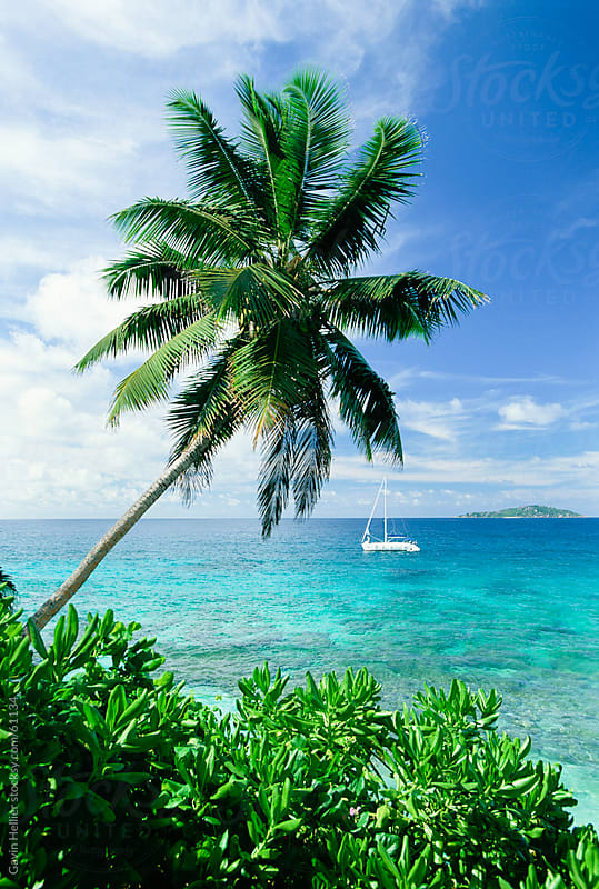 Leaning palm tree and beach, Anse Severe, island of La Digue, Seychelles, Indian Ocean, Africa by Gavin Hellier for Stocksy United