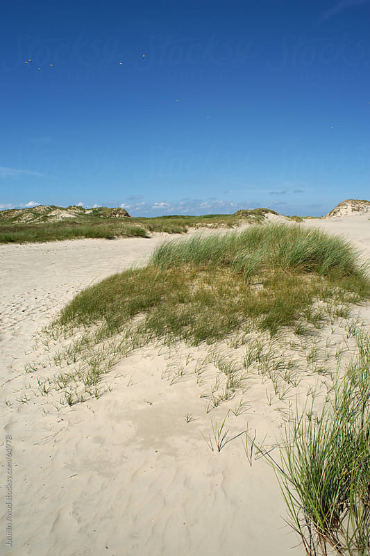 Dunes in the Nature Reserve of the Island Norderney, Germany by Jasmin Awad for Stocksy United