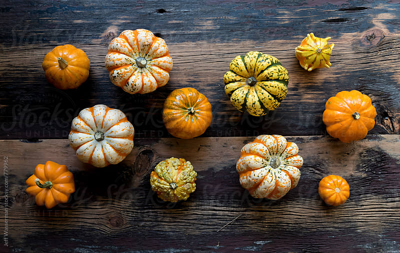 Pumpkins and Squash on Wood by Jeff Wasserman for Stocksy United