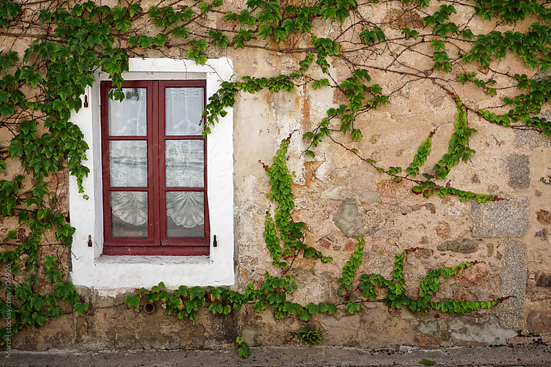 Vine on an old house by Marcel for Stocksy United