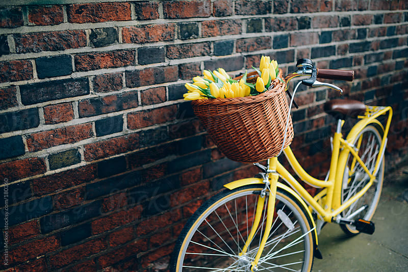 Bicycle with tulips by Kirstin Mckee for Stocksy United