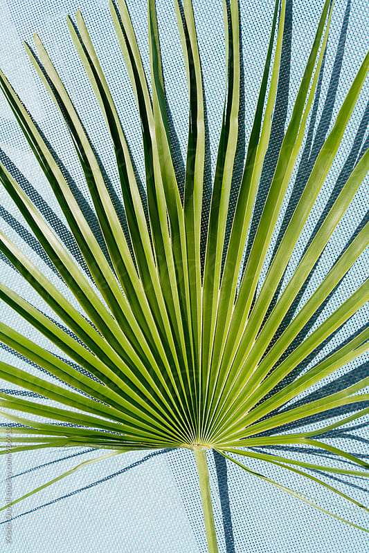 Palm leaf  by Kristin Duvall for Stocksy United
