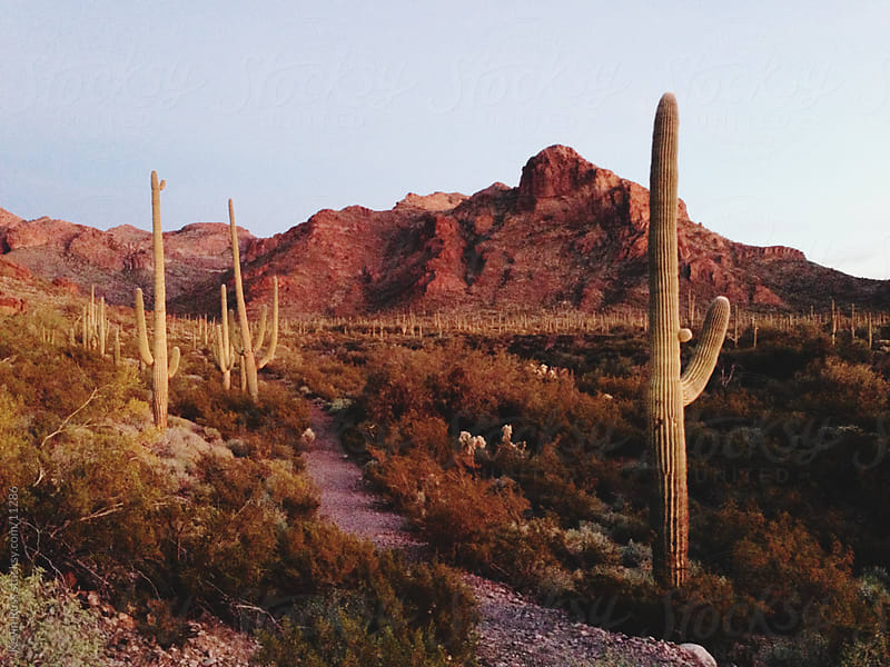 Sunset Saguaro Trail by Kevin Russ for Stocksy United
