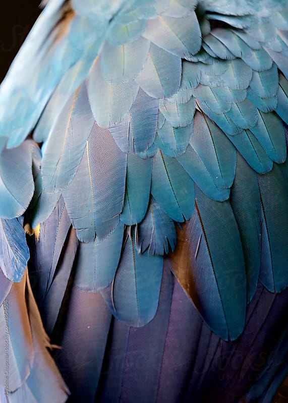 The magnificent colours of the tropical Macaw bird