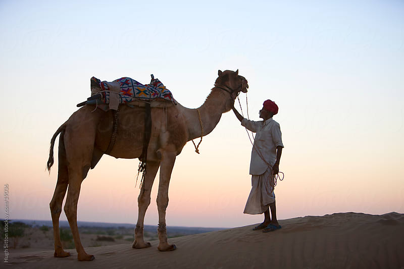 Rajasthani man with his camel in the Thar desert. Rajasthan. India by Hugh Sitton for Stocksy United