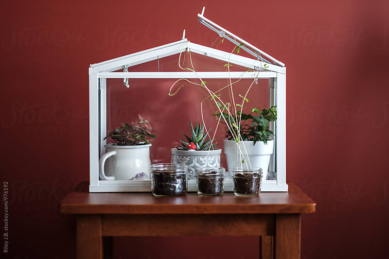 Plants on inside & outside a terrarium  by Riley J.B. for Stocksy United