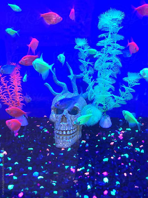 Glowy neon goldfish and glittery skulls by Carolyn Lagattuta for Stocksy United
