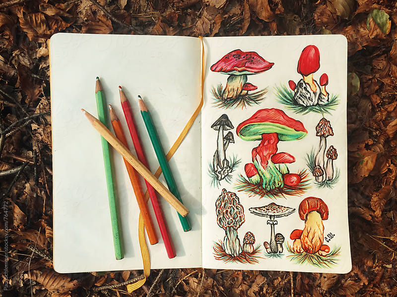 mushrooms by Paul Schlemmer for Stocksy United