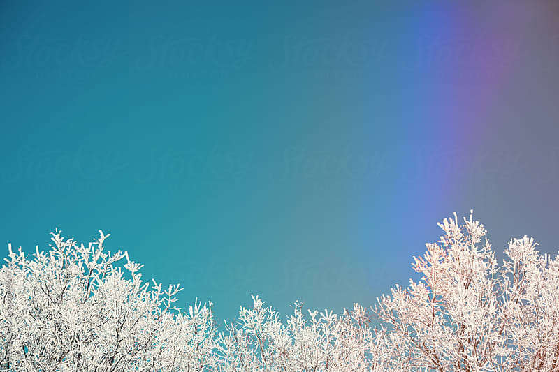 Winter landscape  by Ani Dimi for Stocksy United