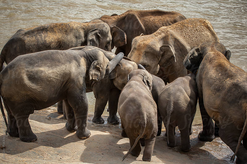 Elephant orphanage in Pinnawalla, Sri Lanka by Jino Lee for Stocksy United