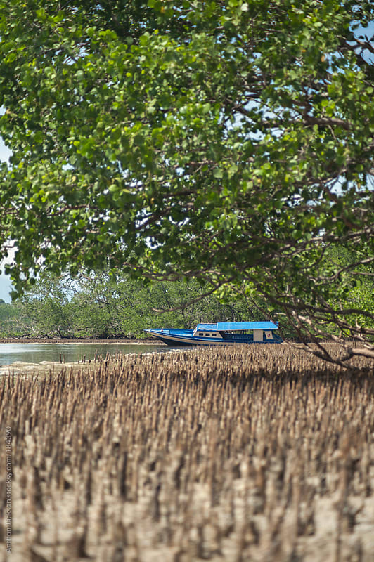 Mangrove Boat by Anthon Jackson for Stocksy United