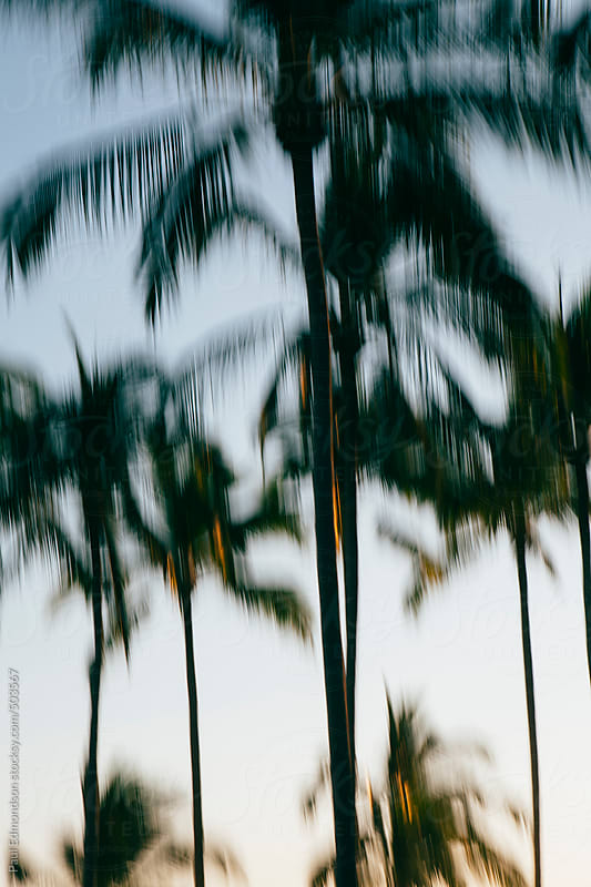 Abstract of palm trees by Paul Edmondson for Stocksy United