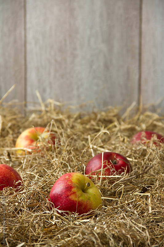 Apples on hay, close up by Kirsty Begg for Stocksy United