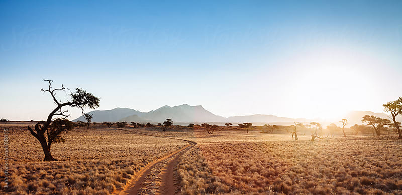desert track into the sun, Namibia by Micky Wiswedel for Stocksy United