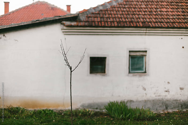 Tree in front of an old house  by Marija Kovac for Stocksy United