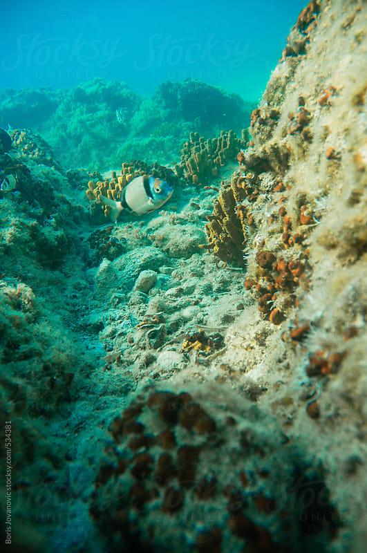Underwater shot of fish swimming between two rocks by Boris Jovanovic for Stocksy United