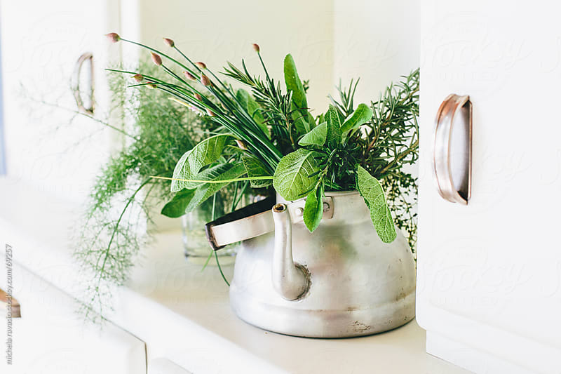 Aromatic herbs by michela ravasio for Stocksy United