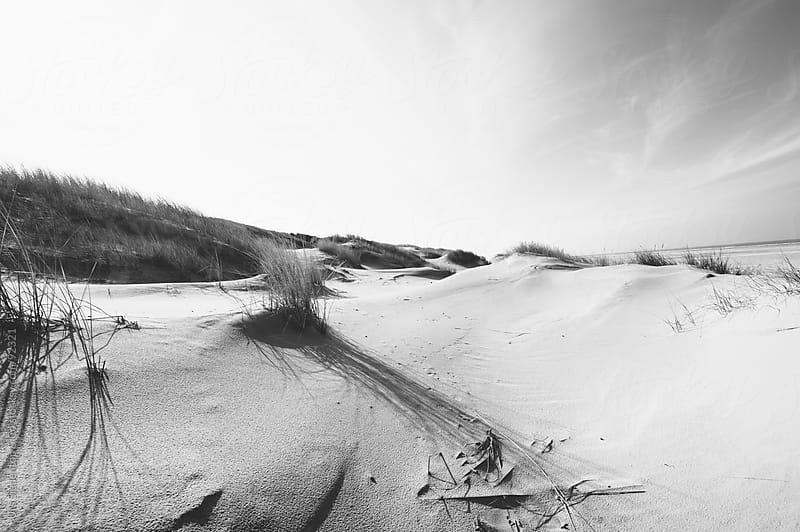 Dune by Urs Siedentop & Co for Stocksy United