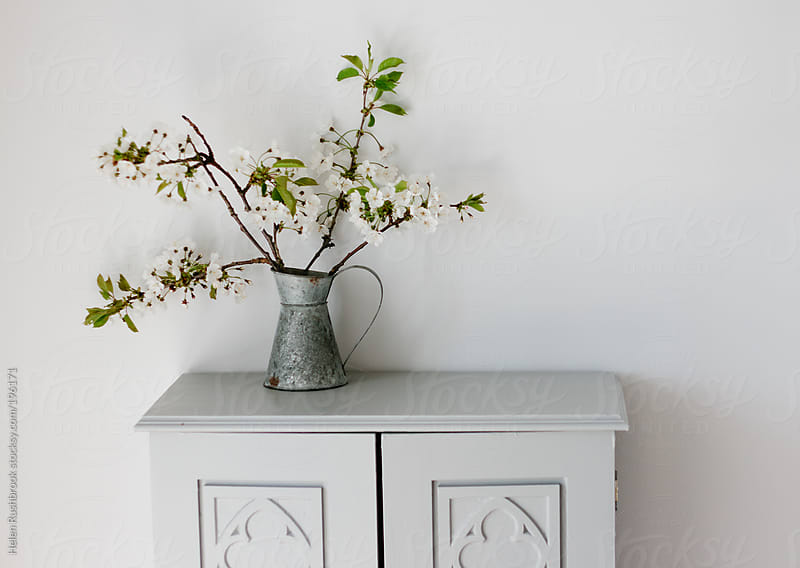 A galvanised jug with white blossom on a painted cupboard by Helen Rushbrook for Stocksy United